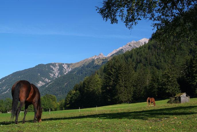 Pferde helfen in schwierigen Lebenssituationen